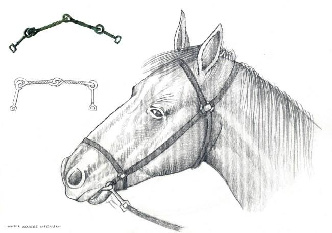 bardatura-antica-cavallo